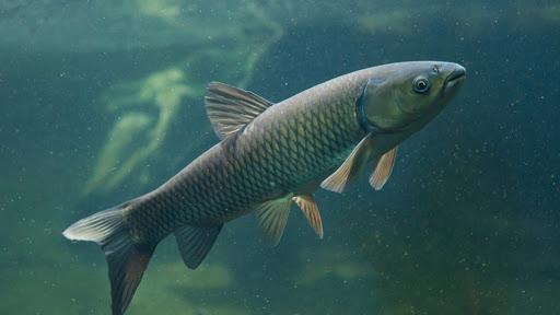 Tăng cường chất lượng nuôi trồng thủy sản trong thời điểm giao mùa
